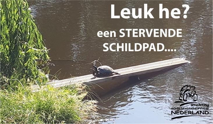 """Rel om """"buurtschildpad"""" in Warmenhuizen"""